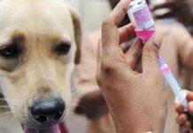 Menyedihkan, Vaksinator Rabies Dapat Insentif Rp 7.500 Per Ekor