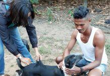 Rabies Serang 9 Kecamatan di Kabupaten Sikka, 31 Spesimen Positip