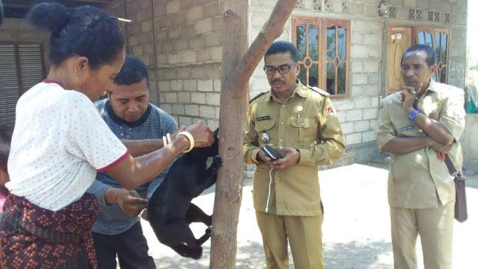 Vaksin Hewan Penyebar Rabies, Menyisir Hingga ke Pelosok Dusun