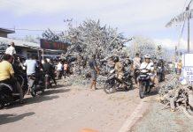 "Aduh! 15 Jam Pohon Tumbang Tutup Jalan Negara, Pemerintah ""Tidur"""