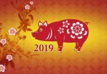 Shio Babi: dari Kekayaan, Karier, Cinta, Kesehatan, dan Keberuntungan
