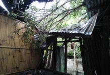 Hujan Badai di Sikka, Pohon Tumbang Timpa Rumah Warga