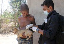 Rabies Kembali Mengancam, 5 Positip Tertular Virus