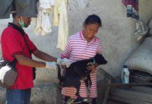 Gigit Balita 1,9 Tahun, Anjing dari Lepolima Positip Rabies