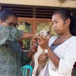 Sudah 27 Spesimen Otak Anjing di Sikka Positip Rabies