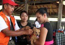 Besok Mulai Vaksinasi Anjing, Petugas Sasar 5 Desa di Waigete