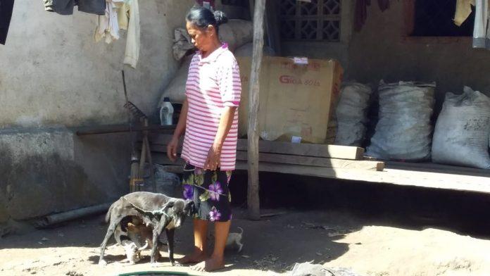 Senjata Makan Tuan, Anjing Rabies di Wolomarang Gigit Tuan Sendiri