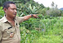 5 Hektar Sawah di Masabewa Disapu Banjir Bandang